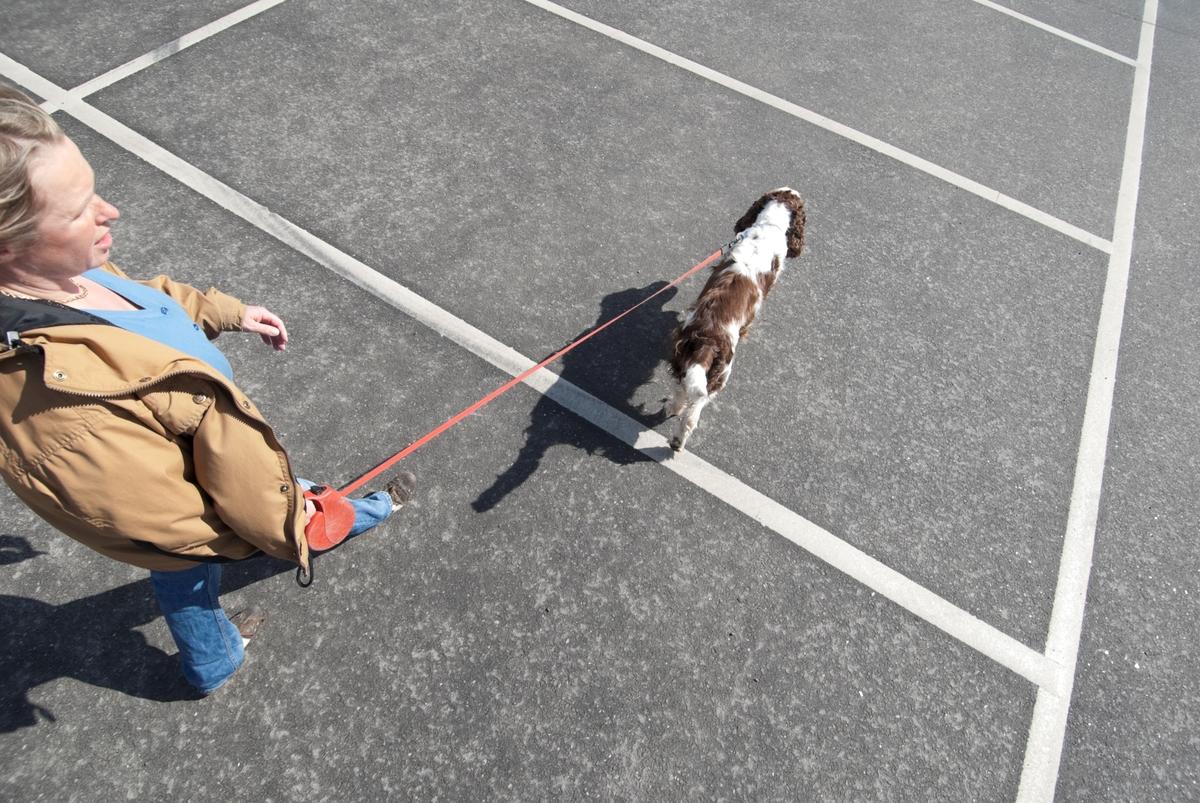 Hunden Balder på tur med sin eier.