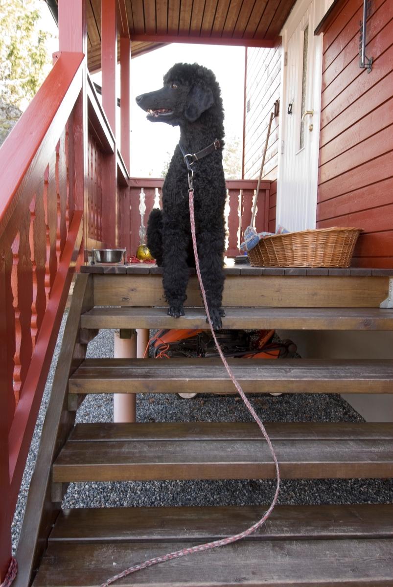 Hunden Pedro sitter på trappen ved inngangen til sitt hjem.