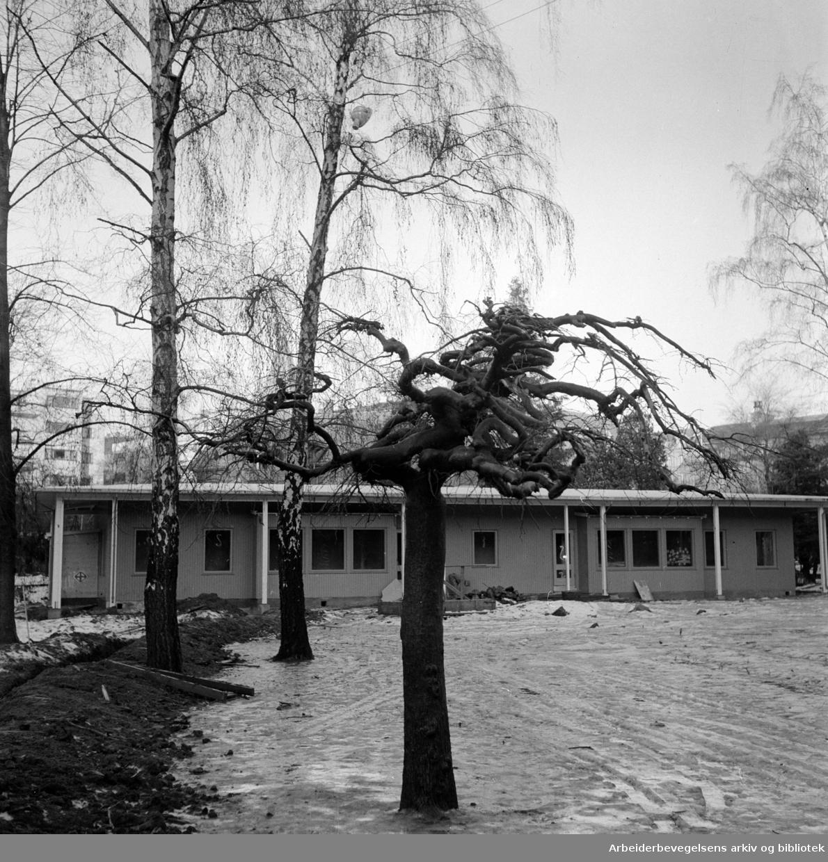 Pipervika Daghjem. Desember 1956