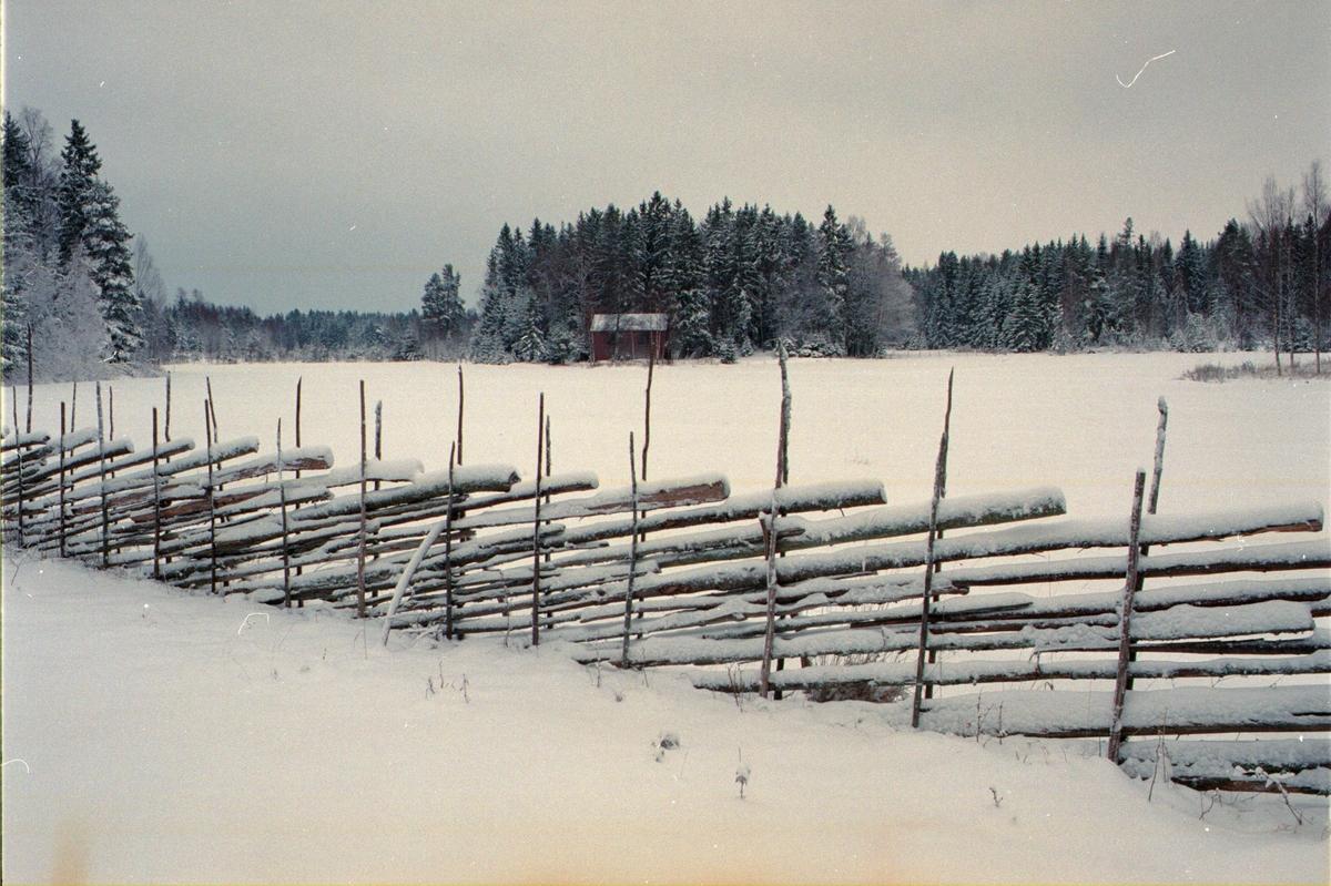 Vinterlandskap, Lönnholmen, Gräsö socken, Uppland 1994 - 1995