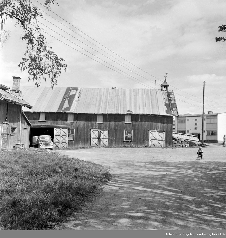 Fjellhus Allé. Fjellhus gård. Juni 1962