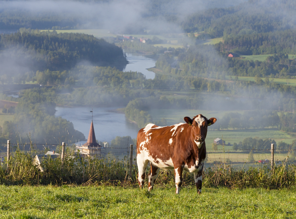 <p>Anno museum er et av Norges største museer og favner et bredt spekter av kultur- og naturhistorie med lokal, regional og nasjonal betydning.</p>