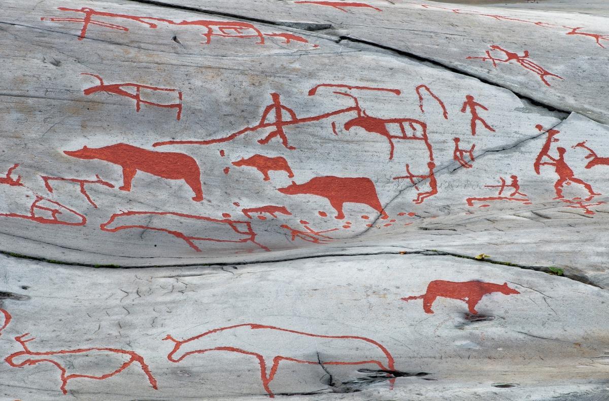 Figurer fra helleristningsfeltet ved Jiebmaluokta eller Hjemmeluft i Alta kommune i Finnmark.  Vi ser både dyr – bjørner og reinsdyr – og mennesker som jager disse dyra, fortrinnsvis bjørnene.  Flere av menneskeskikkelsene ser ut til å være bueskyttere, en bærer et langt, hakkeliknende redskap, løftet i angrepsstilling og en holder i ei lang stang, muligens et spyd.  En av forfølgerne later også til å være tomhendt.  Samtlige figurer er tydeliggjorte med rødbrun maling på det ellers grå berget, og mens mennesker og reinsdyr er framstilt som strektegninger er bjørnefigurene helskraverte.  Fotografiet er et utsnitt fra ei flate hvor det til sammen er cirka 180 figurer.  Litt mer informasjon om helleristningsfeltet ved Jiebmaluokta eller Hjemmeluft finnes under fanen «Opplysninger».