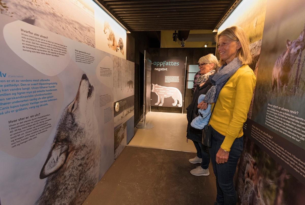 Fra «portalen» i utstillingen «Ulvetider» på Norsk skogmuseum.  Fotografiet er tatt under åpningen av denne utstillingen, 26. april 2018.  Bildet viser to kvinner som studerer montasjer med fotografier og tekst som dreier seg om ulvens biologi.  På Norsk skogmuseums hjemmesider er «Ulvetider» omtalt slik:  «Utstillingen setter fokus på konflikter rundt ulv i Norge og hva som har ledet fram til situasjonen i dag. Du møter mennesker som lever i ulvesonen som forteller om sine opplevelser og du kan lære om dagens forvaltning, forskning og få kunnskap om ulven som art.   Norsk skogmuseum ønsker å bidra til å forstå meningsmotstanderne bedre og vil selv være en arena der gode diskusjoner kan oppstå. Gjennom utstillingen ønsker vi å legge til rette for en konstruktiv utvikling av en fastlåst situasjon. Museet bygger på konfliktdempende metoder utviklet av Nansen Fredssenter. Hovedmålgruppen for utstillingen er ungdom i alderen 15–18 år, men vi ønsker å nå et bredt publikum og tror mange vil ha glede og nytte av å se utstillingen.  Utstillingen er blant annet støttet av Fritt ord, Miljødirektoratet og Anno - Museene i Hedmark.»