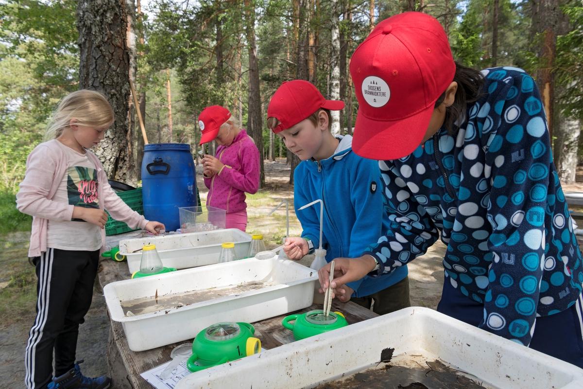 Fra temadagsarrangementet «Skog og vann - naturskole for alle!» på Norsk skogmuseum i Elverum i juni 2018.  Fotografiet er tatt på Prestøya, der fire elever var ivrig opptatt med å undersøke prøver som ferskvannsbiologen Lise Cats Myhre hadde hentet fra Sagtjernet, en populær badeplass i lokalsamfunnet.  Elevene fant mye liv som de færreste legger merke til når de ferdes i stransonen på slike vann.  «Skog og vann» var ett av femten temadagsopplegg Norsk skogmuseum tilbød barnehager og grunnskoler i 2018.  De fjorten andre hadde mer avgrenset tematikk, og mange av dem var orientert mot årstidsspesifikke forhold i naturen eller i tradisjonelt arbeidsliv.  «Skog og vann» var derimot tilpasset de mange som ønsket en elevtur til museet mot slutten av skoleåret, uten noe spesielt læreplanrelatert pedagogisk mål.  Aktivitetstilbudet var derfor vidtfavnende og mangfoldig, fordelt på et stort antall «stasjoner» med aktivitetstilbud på museets uteområde.  Aktører fra en del frivillige organisasjoner med skog- og utmarksarktiviteter på programmet samarbeidet med museets formidlere om avviklinga av arrangementet.  I 2018 samlet «Skog og vann» 3 000 elever fordelt på fem dager.