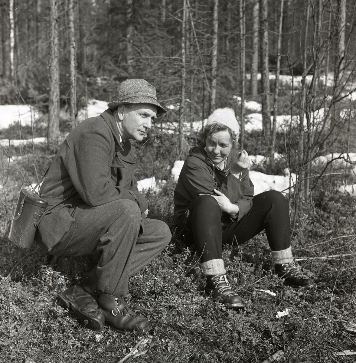 En man och en kvinna sitter bland bärriset i skogen den 27 maj 1958. De befinner sig i Harads och kikar efter fåglar.
