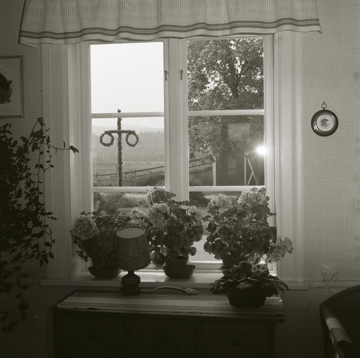 Ett fönster med blommor stående på fönsterbrädan vid gården Sunnanåker. Utanför fönstret syns midsommarstången, 1971.