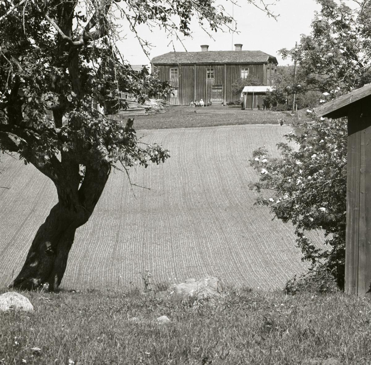 En gård skymtar fram bakom några träd och en lada, 1967-68.
