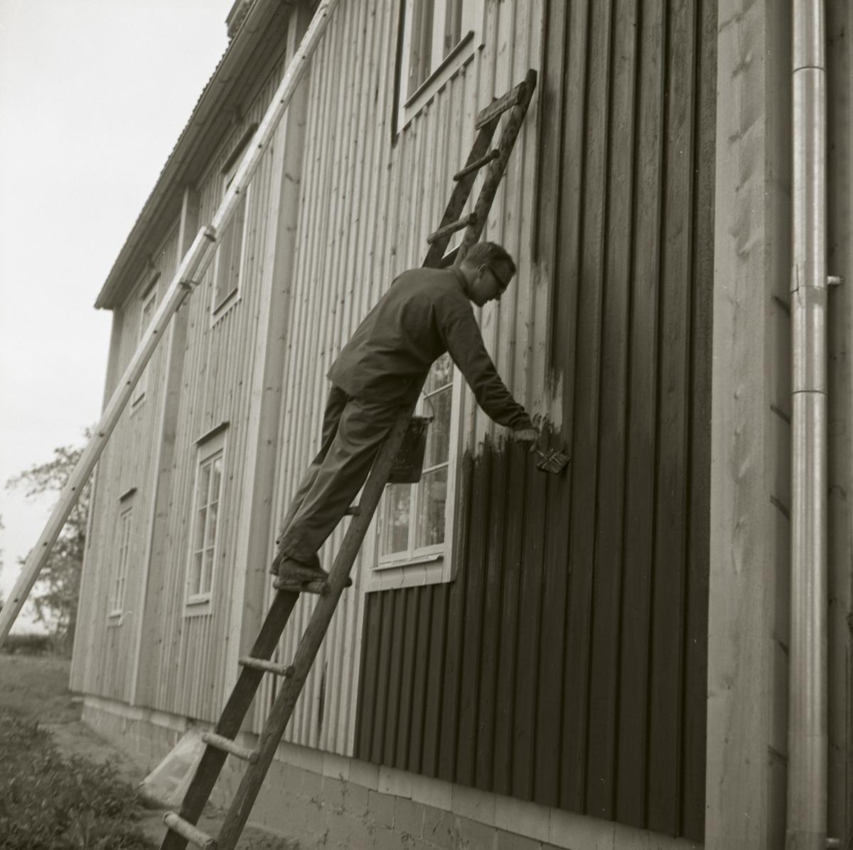 En man står på en stege och målar bostadshuset vid gården Sunnanåker, 1967-68.