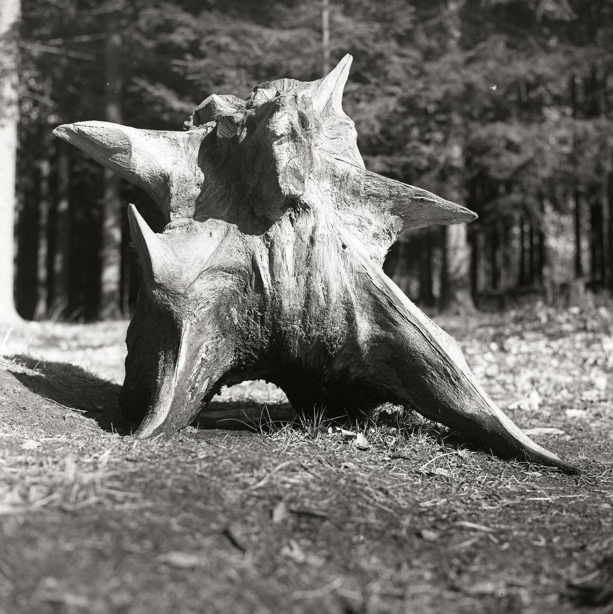 En stor stubbe formad som en björn framför en skog.