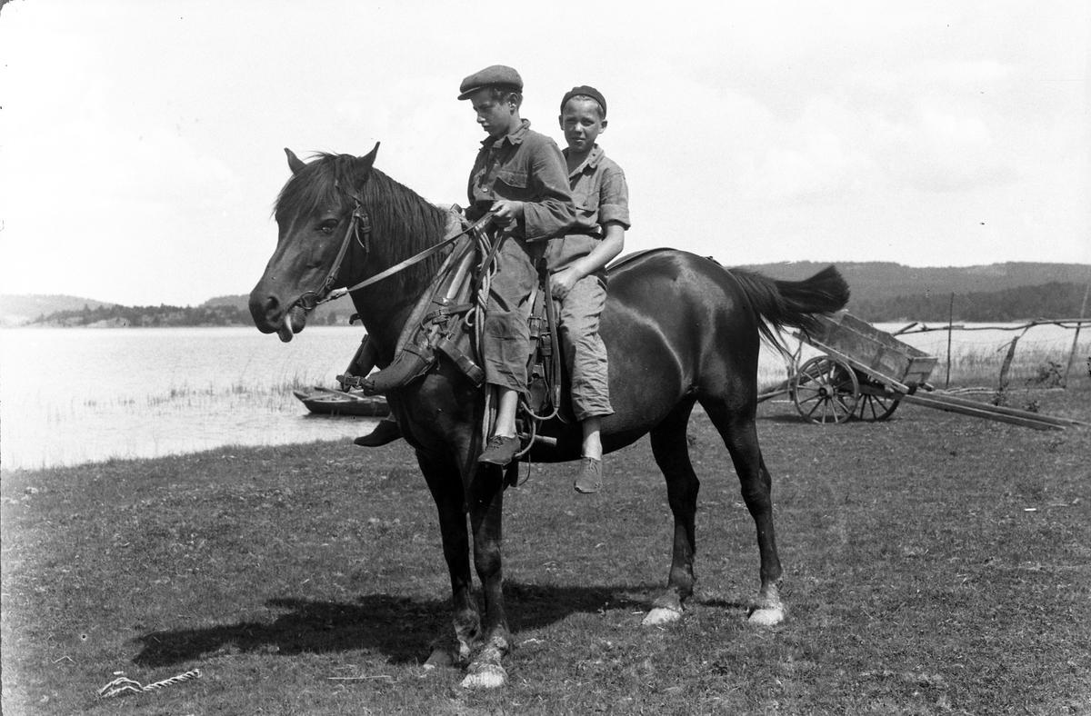 """Två pojkar rider på en häst. I fotografens anteckningar står det """"35 films fr. semester på Halö""""."""