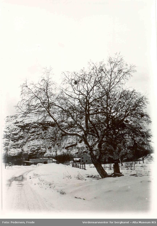 Altasaken. tre, snø
