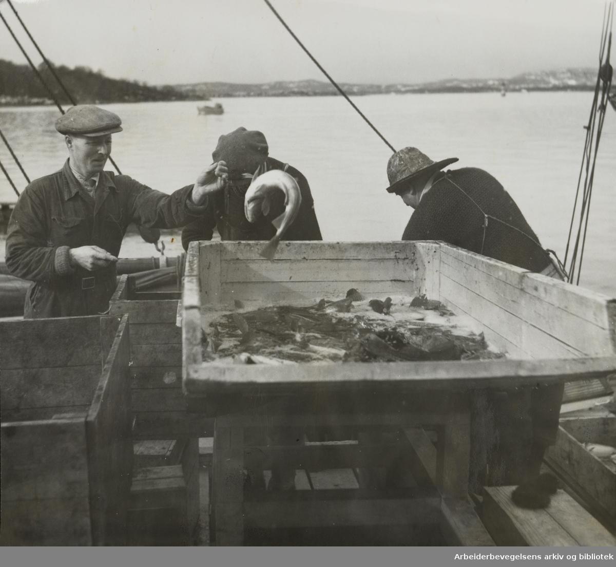 Fiskehallen. Mai 1954