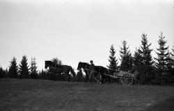 Seks bilder fra Hærens Hesteskole på Starum november 1955. K
