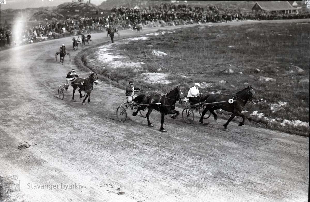 Hester og kusker i travløp på banen.
