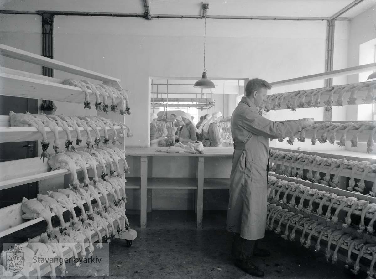 Bildet viser tørking og forming av fjørfeslakt...Fotografiet er gjengitt som illustrasjon i Jærens Hønseavlsforening - Rogaland Egglag 1896-1946. Stavanger 1947, side 38.