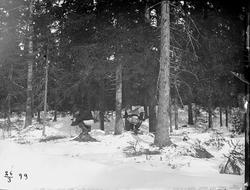 I skogen, Riddarhyttan.
