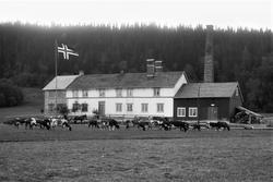 Ytterøy meieri,trønderlån ombygd og påbygd til et meieri.