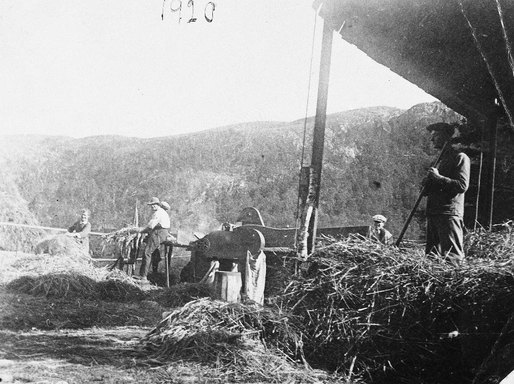 """venstre ser ein halmstakken.Tresking på Sæland i 1920. Treskeverk midt på biletet med """"Skule-Per"""" - Per Høyland på matebrettet.Framme til høgre ser vi ein tjelm med tak som kunne løftast eller senkast ved ilegging eller uttak av halm. Bak til venstre ser ein ein halmstakk."""