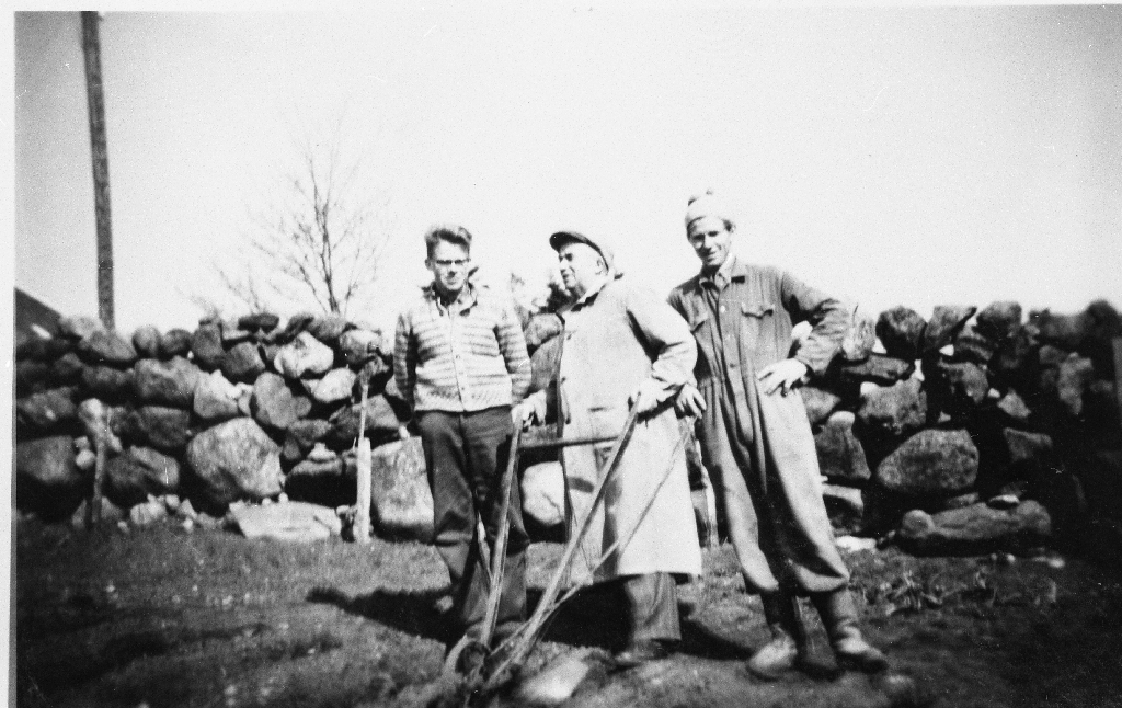 """Hypping med """"koneplagar"""". F. v. : Jomar (1941 - ), faren Jon Haugland (1905 - ) og drengen Olav Fosse."""