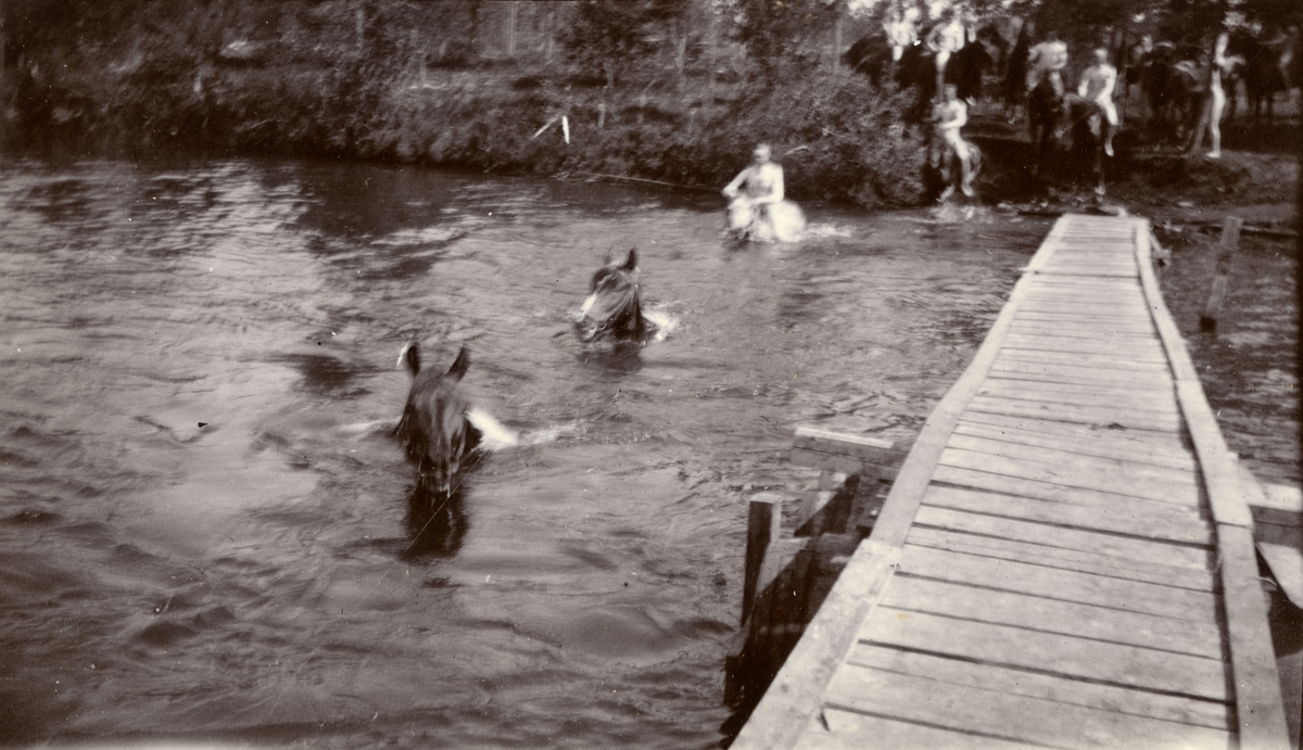 Simning med hästar över Piparbölesjön.