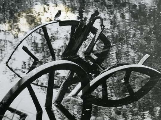 Sädesärla sitter på trähjul i ett vattendrag, sommaren 1965.