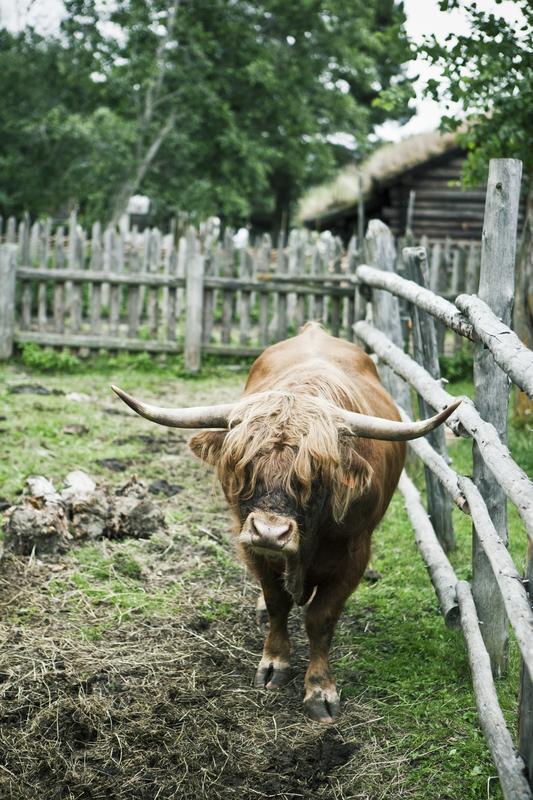 Farm animal, Sel 2009