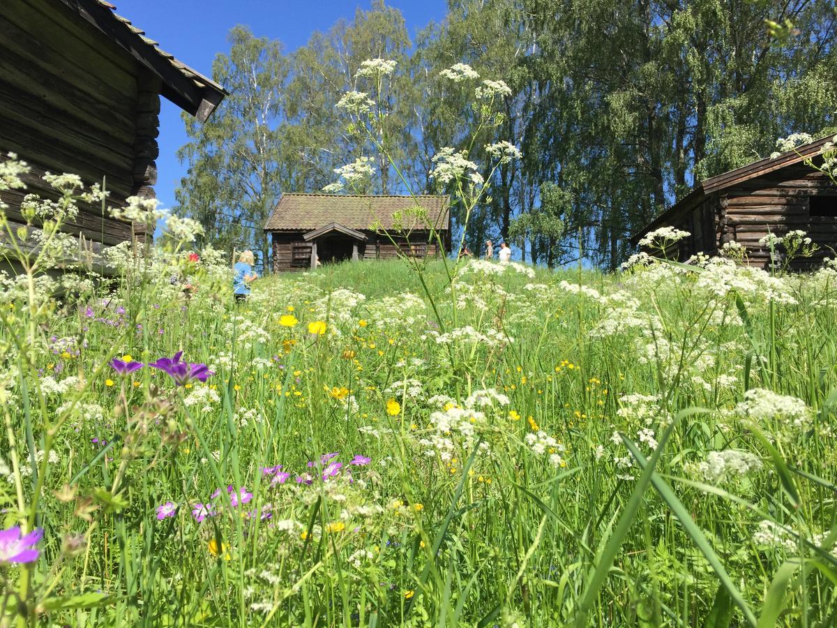 Hvamshaugen_blomstring_juni