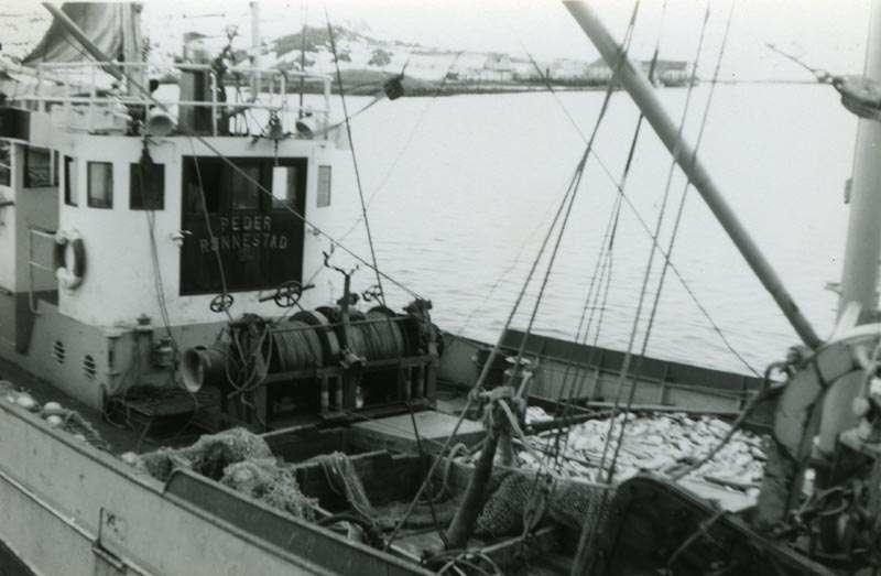 "Forskningsfartøyet ""Peder Rønnestad"" med fangst"