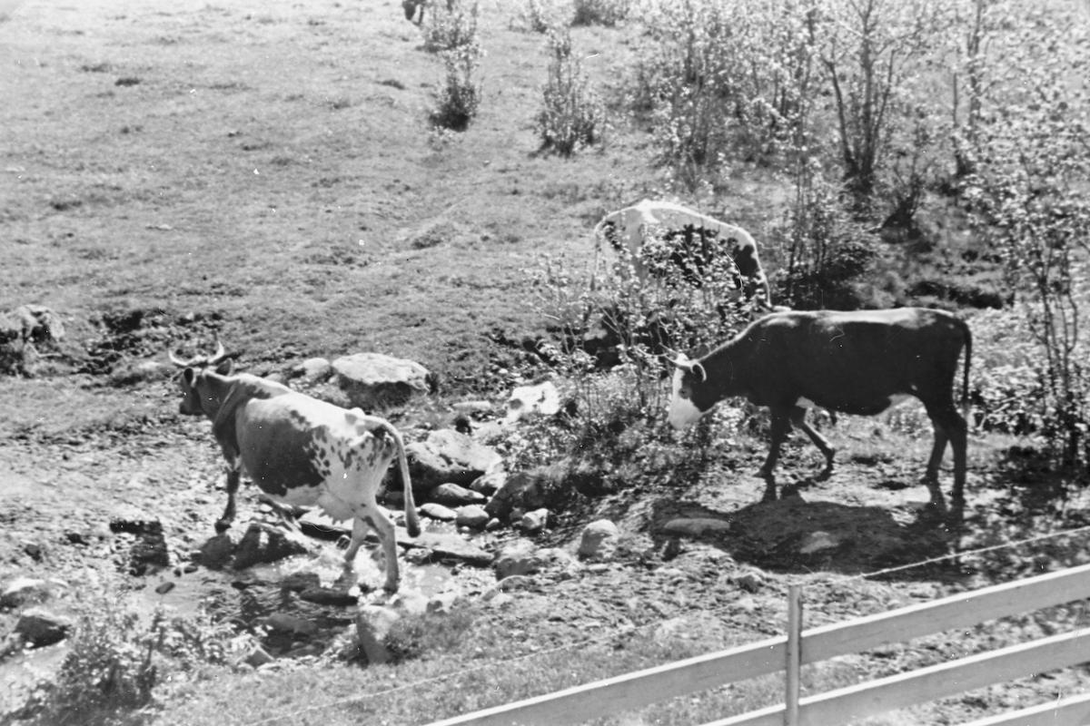 Fjørkenstadsetra på Totenåsen 1942