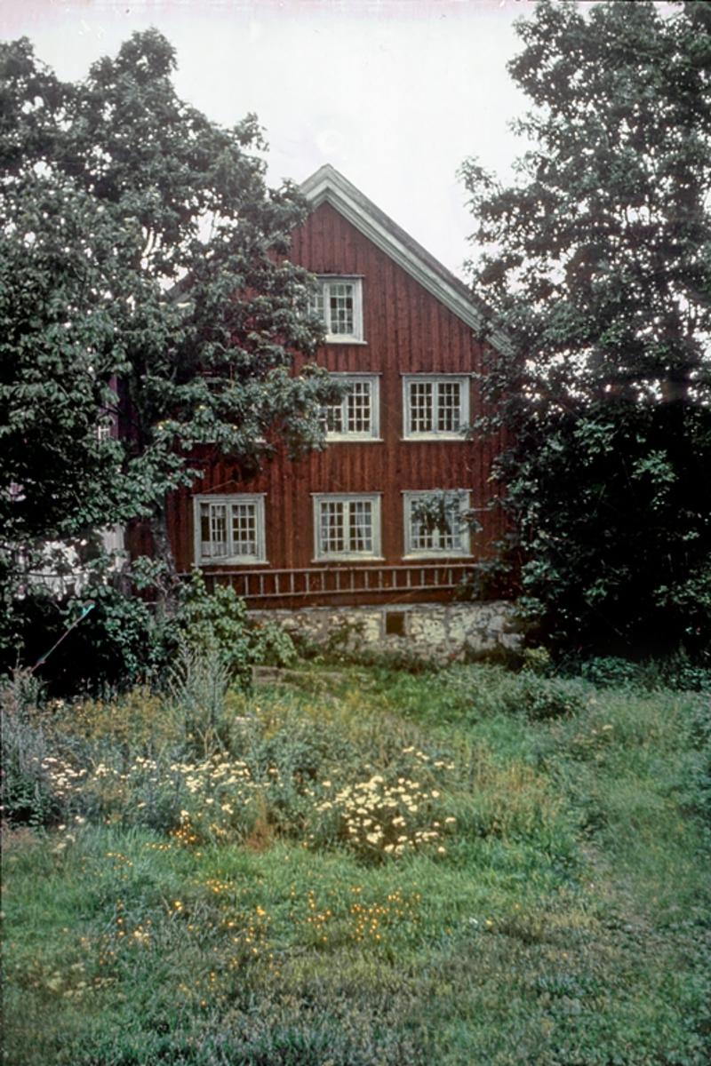 Saltrød gård. Rødmalt gavl, hage og trær. Fotografert før riving. Nedeneshus.