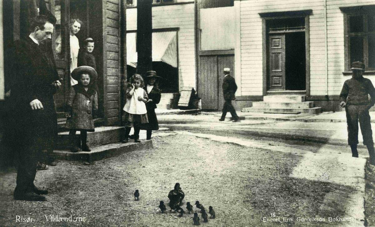 Gateparti fra Risør med Andemor med unger