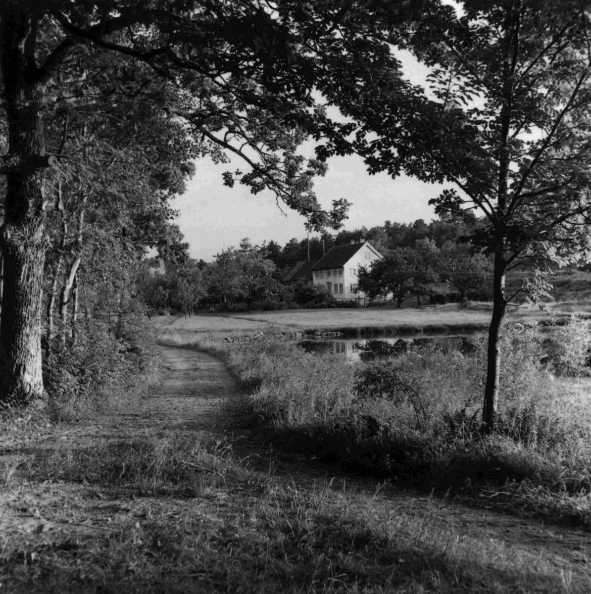 Kvanneid gård, Kvanneid i Høvåg  - g.nr. 49, b.nr. 1