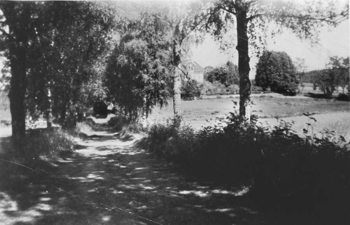 Vestre alle fra Kirkeveien mot Rullestad gård. Se bilde 5