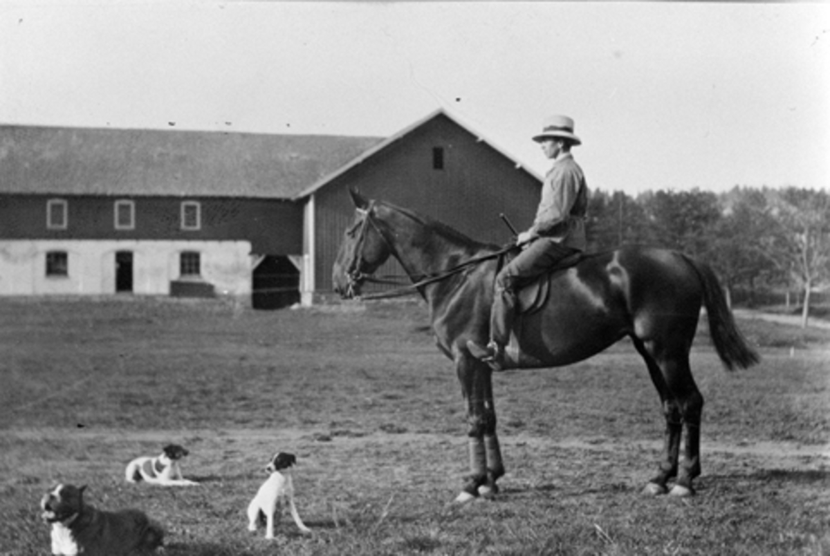 "Hoel gård, Nes, Hedmark. Mann på hesteryggen. Tekst til bildet er ""Paa inspekstion Rolf, Nigger, Peggy, Black, Eagel""."