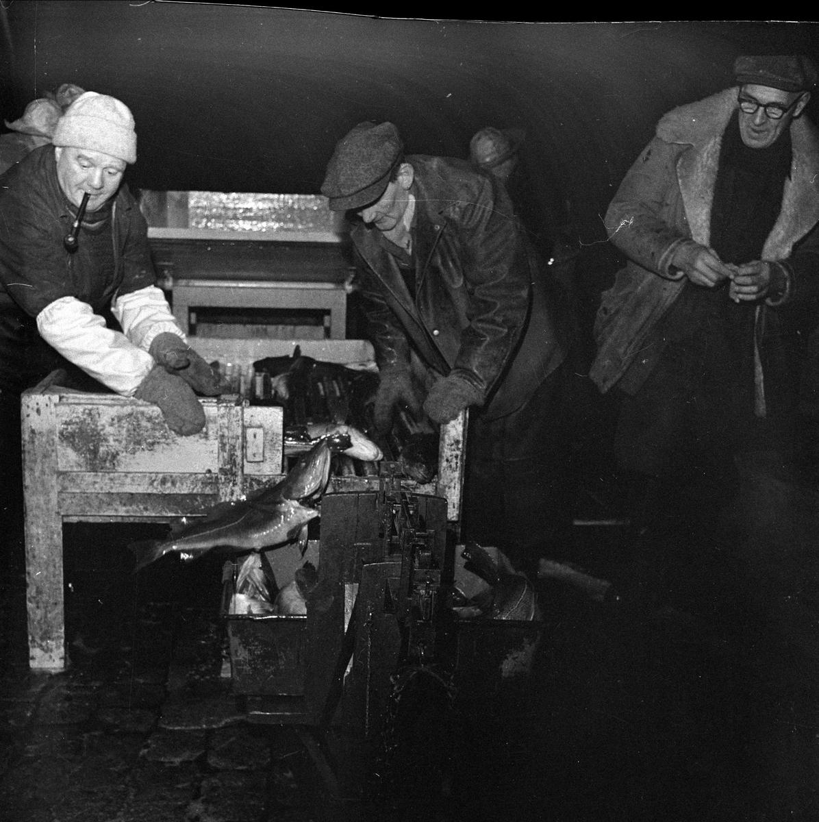 Juletorsken kommer til Oslo, 24.12.1956