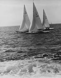Kappsegling på Marstrandsfjorden.