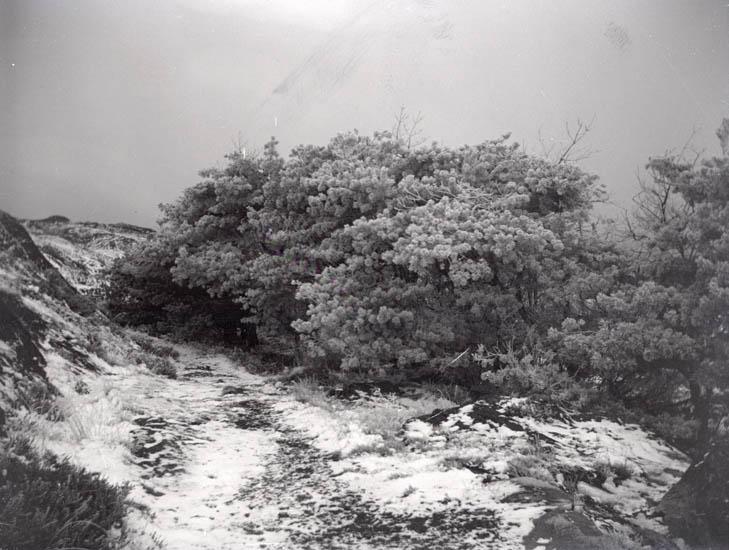 En del misslyckade foton. Rimfrostfoton och Swahnska graven.1928-30. 12 st. Ej Kopierade.