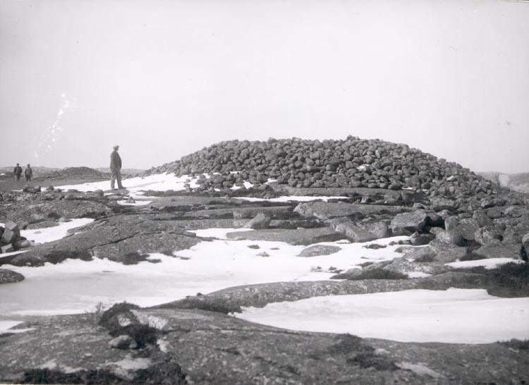 """Noterat på kortet: """"MALMÖN"""". """"KUMMEL"""". """"FOTO (D76) DAN SAMUELSON 1924. KÖPT AV DENS. DEC. 1958""""."""