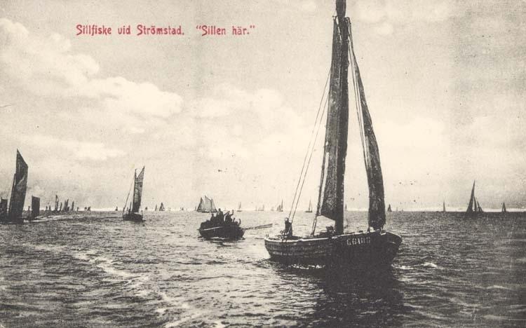 """Tryckt text på kortet: """"Sillfiske vid Strömstad. """"Sillen här"""". """"Krügers Cigarraffär, Strömstad."""""""