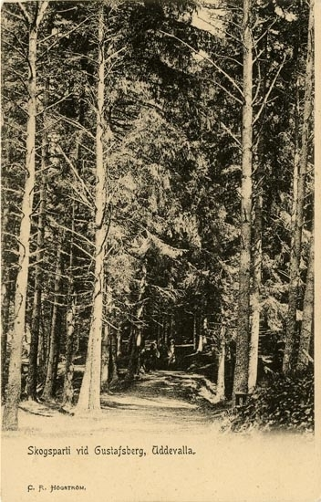 """Tryckt text på vykortets framsida: """"Skogsparti vid Gustafsberg Uddevalla."""""""