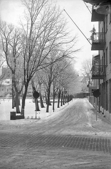 """Enligt fotografens notering: """"Lysekils stadspark mot Kungsgatan""""."""