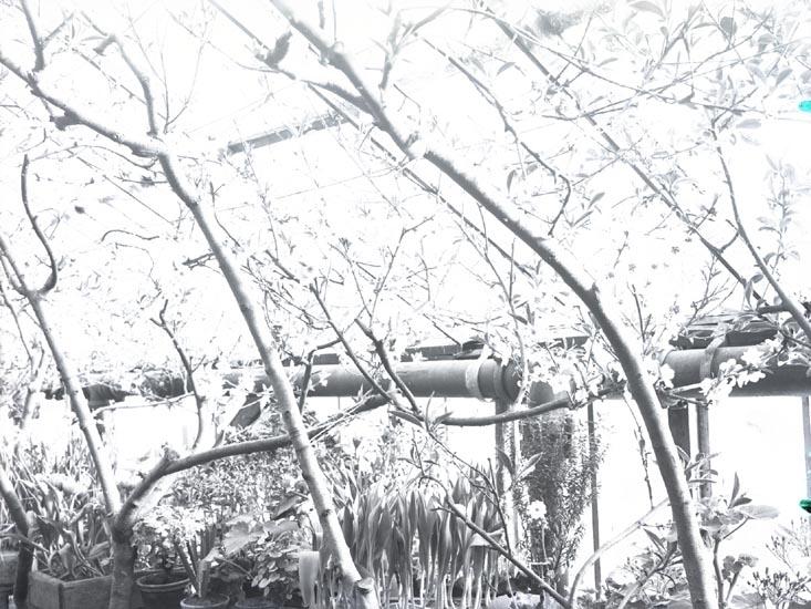 """""""No. 3. 77. 1929. Från Meijer växthus Åtorp."""""""