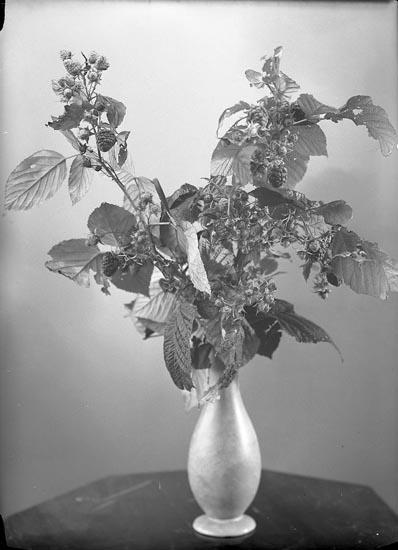 """Enligt fotografens journal nr 6 1930-1943: """"Hallon, Mogna d. 29 Okt, hos Charl. Berntsson""""."""