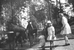 Syskonen Lithander matar hästarna 1917