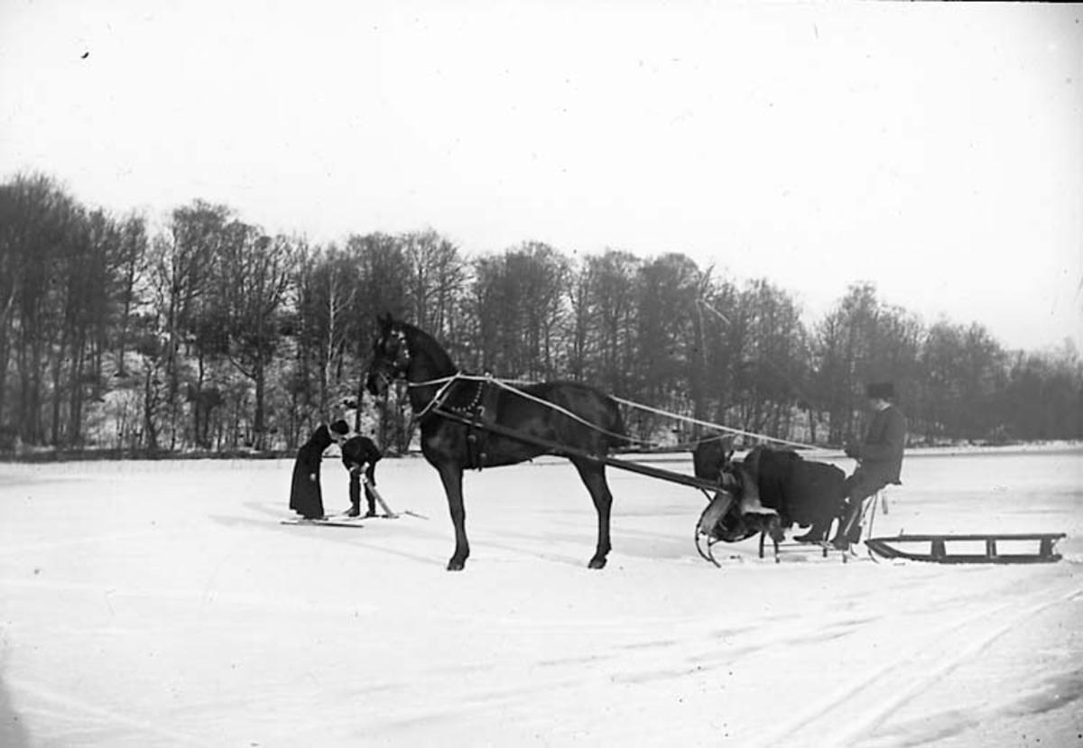 Aktiviteter på is - häst och släde samt skidande par