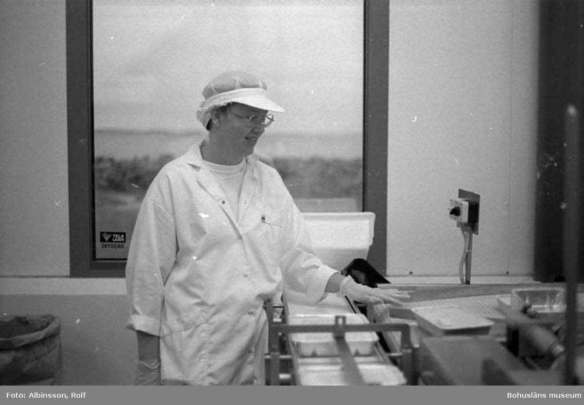"""Enligt fotografens noteringar: """"Marie Louise Henriksson tar emot de frysta gratängerna och ser till att de går vidare, hamnar i kartong till...."""" (AC. Fortsättning bild 217).  Fototid: 1996-01-19."""