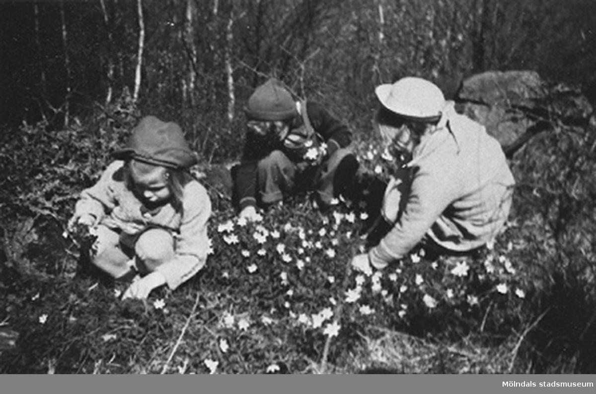 Barn på Krokslätts daghem plockar blommor.Krokslätts daghem, Dalhemsgatan 7 i Krokslätt 1948-1951.
