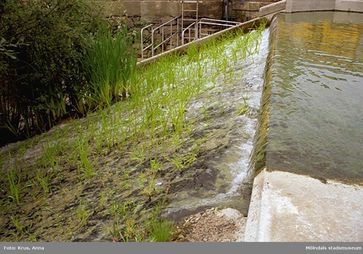 Forsen/ån (Mölndalsfallen) som går genom Forsåker och Papyrus fabriksområde (Forsåker 1:25).
