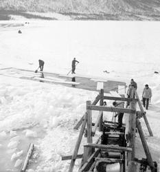 Isskjæring på Møkkelandsvannet, 1954. Isen skulle brukes hos